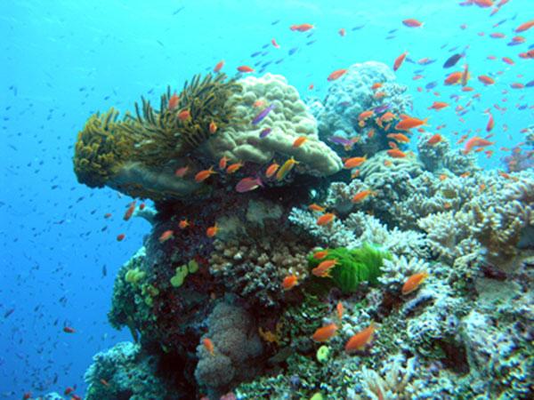 coral_reef