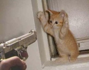 kitten_threat