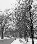 treelined2