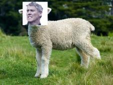 sheep-275928_640