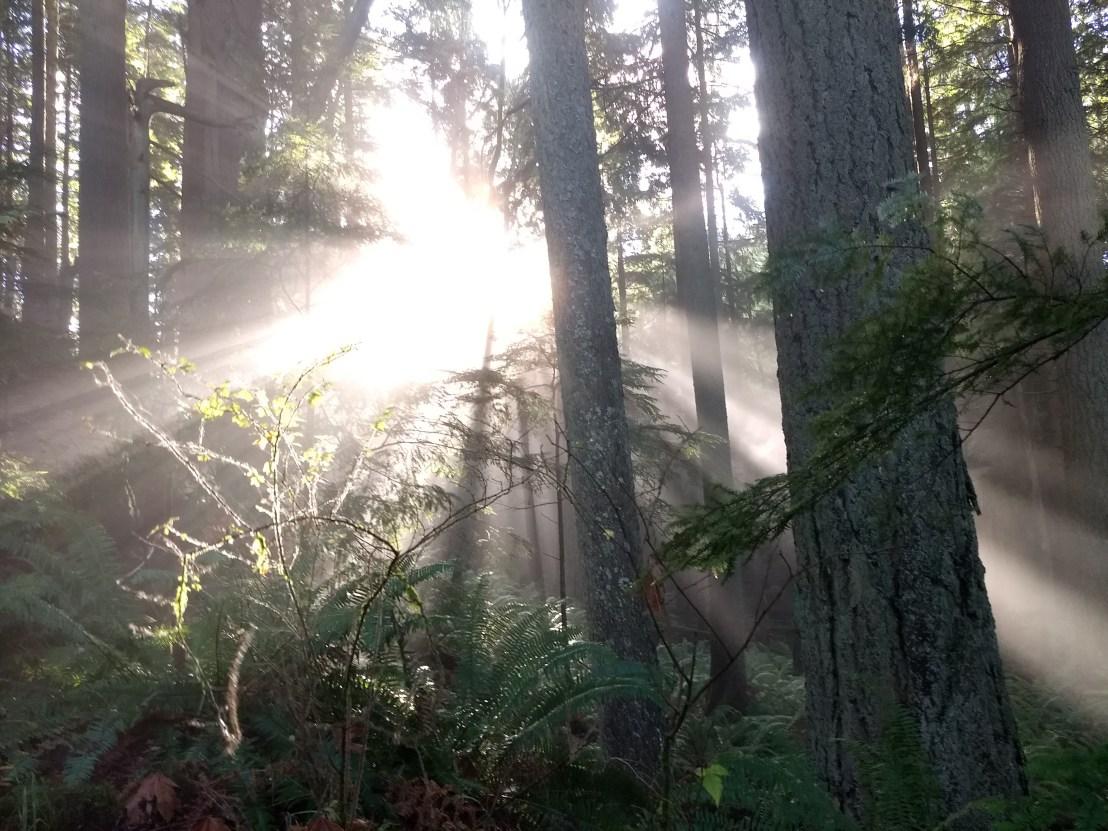 mist and sun on Squak Mountain