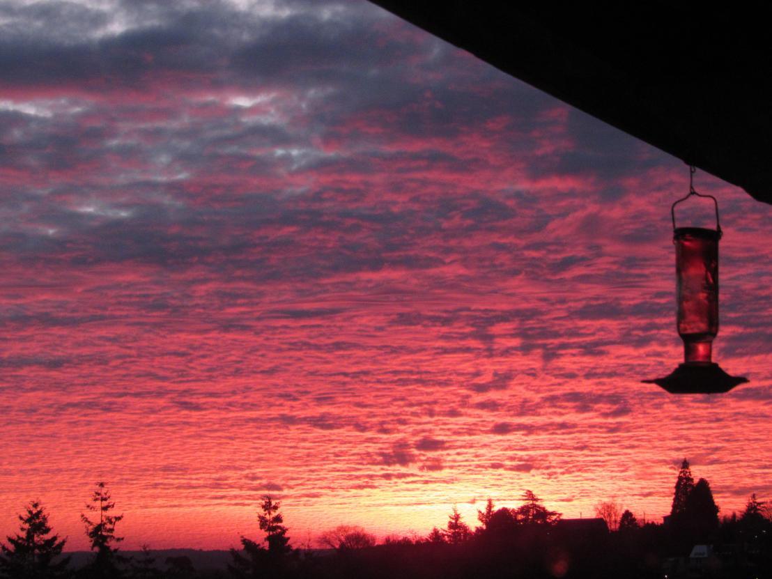 sunset, seattle, pink, purple